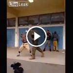 Marine fight play