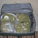 weed 1