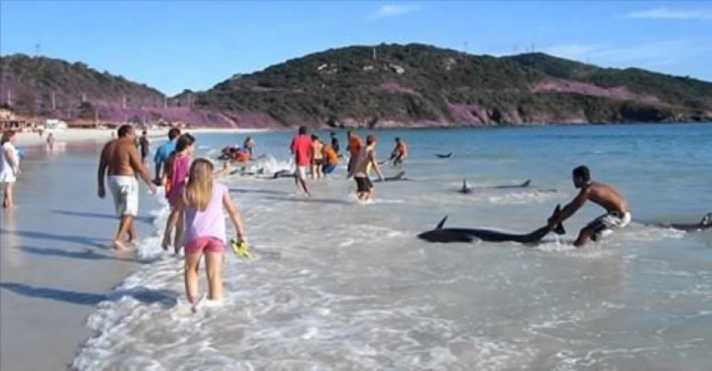 Beached dolphins - photo#28