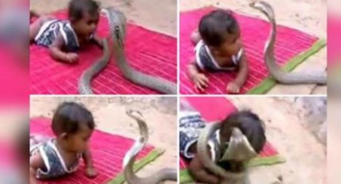 Snake Baby