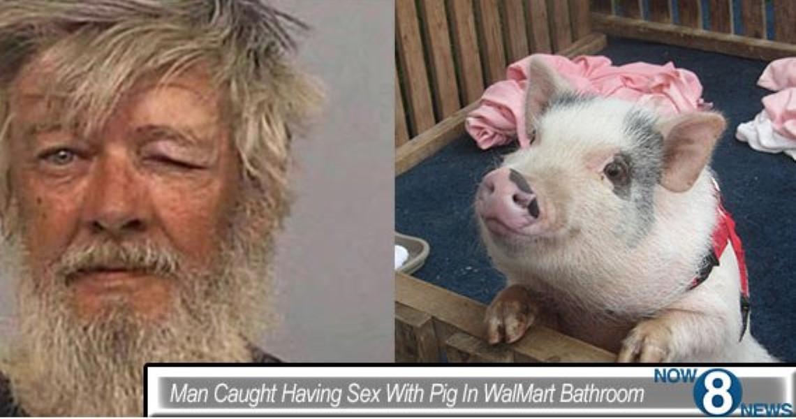 Walmart Pig