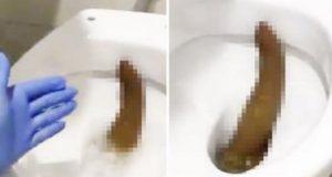 big-poop