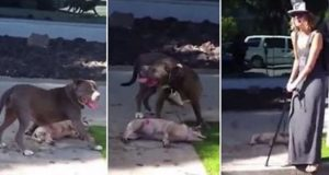 Pit Bull Kills Dog