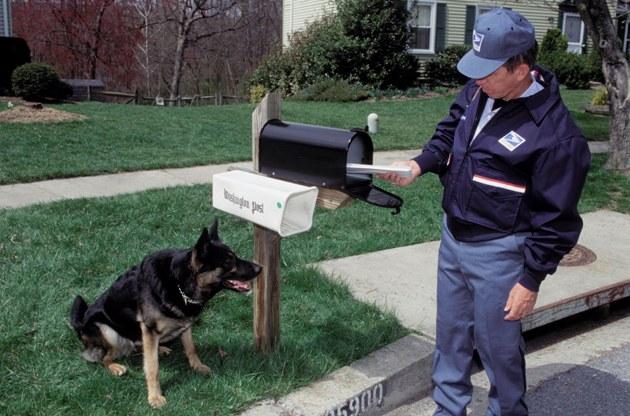 Dog Postman