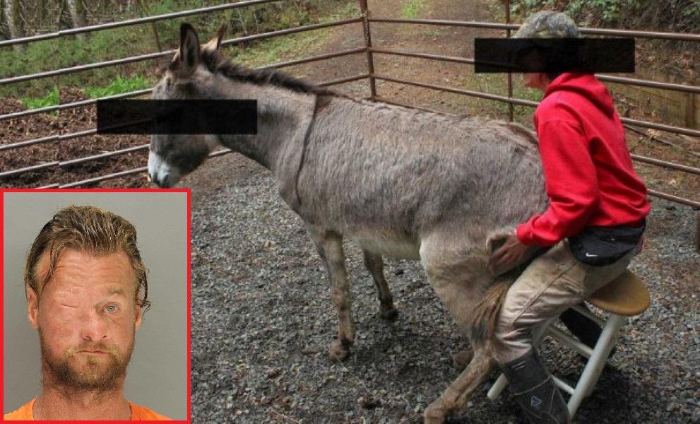 Donkey Man Jail